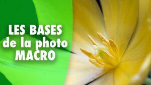 Read more about the article Les bases de la photographie macro (macro-photographie)